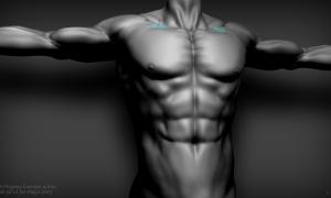 torso3